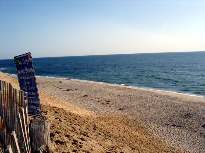 A View Of Cahoon Hollow Beach Looking South Do Not Walk Or Climb On The Dunes Sign Another Picture Surfers Wondering Where